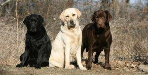 Nemzetközi kutyaverseny Kesztölcön!