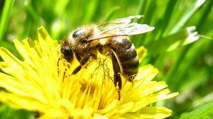 Kesztölcöt nem érinti az esztergomi méhek járványa
