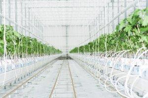 Fiatal high-tech gazdák uralják a szlovák paradicsompiacot
