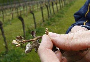 Észak-Szlovákia: talajmenti fagyok