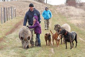 Elment a vaddisznó, a kutya, a szarvas és a birka sétálni