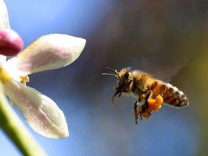 Csalogassunk méheket a kertbe! A kesztölci méhész tanácsai