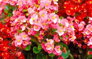 Tíz nagyszerű növény a kert árnyékos zugaiba