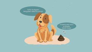 Rendet a kesztölci kutyatartásban!