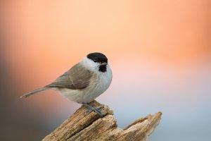 Így vigyázzunk a kesztölci madárfiókákra!