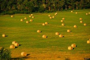 Támogatás a gazdáknak: a zöldítésről Kesztölcön