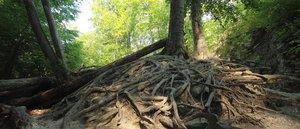 A Pilisi Parkerdő génmegőrzéssel is biztosítja erdeink jövőjét