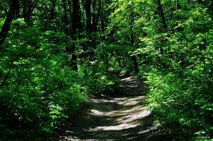 Májusi erdő
