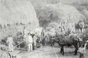 Aratás Kesztölcön az 1800-as évek végén