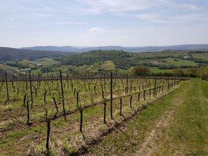 A Vadregényes útvonal a kesztölci szőlők mellett vezet