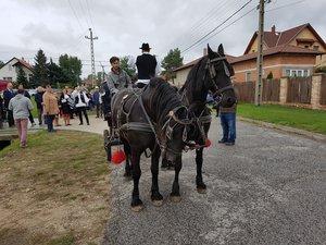 A lovaskocsi, két büszke pacival