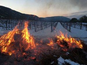 A tavaszi fagyok ellen tűzzel védekeztek a Szivek Pince szőlészetében