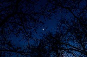 Hold a fák között