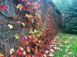 Kerítés ősszel