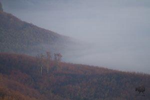 Köd a Pilis lábánál