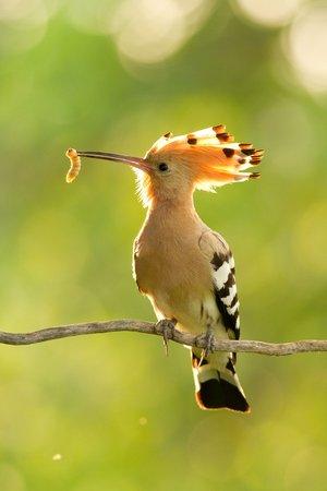 Kesztölc madarai - Molnár Dávid fotói
