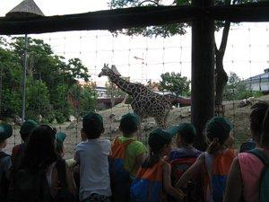 A zsiráf birodalmában
